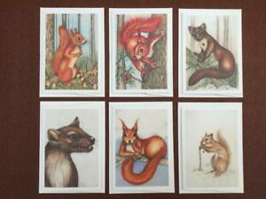 Wildlife-charity-greeting-cards-featuring-Red-Squirrels-and-Pine-Martens-6-pack