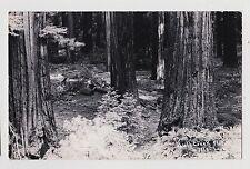 RPPC,Bull Creek Flat,CA.Humboldt Redwoods,Humboldt Co.Photo by Laws,c.1945-50s