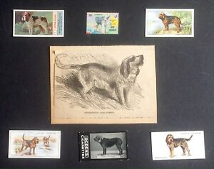 Details About Otterhound Collectable Diy Collage Print Tobacco Card 5 Postage Stamp