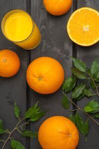 Grafted-Nebo-Sweet-orange-LIVE-Tree-Fruit-Soon
