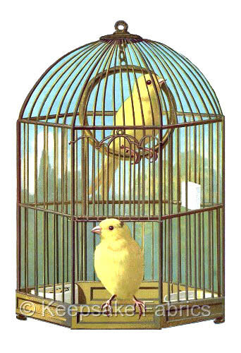 Caged Canaries Birds Quilt Block Multi Sizes FrEE ShiPPinG WoRld WiDE