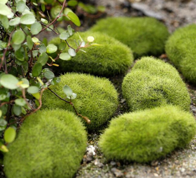 Stone Moss Miniature Dollhouse Garden Craft Fairy Bonsai Plant Decor 1pc