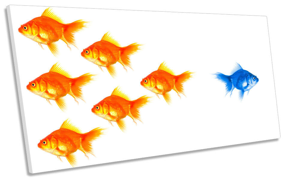Goldfish Stand Out Modern PANORAMIC BOX FRAME CANVAS ART Picture