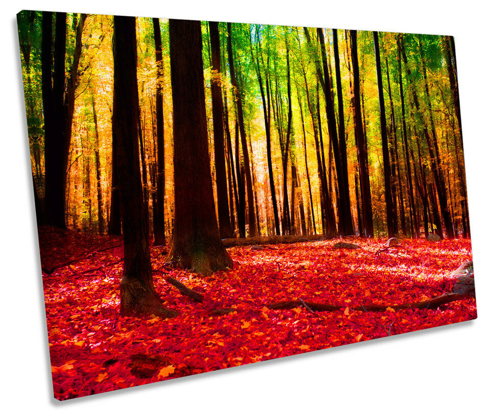 Forest Modern Landscape Floral SINGLE CANVAS WALL ART ART ART Print Picture 9b12ba