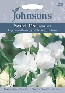 20 Seeds Lathyrus Latifolius Crown Special Mixture