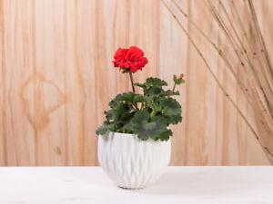 Fioriere Per Fiori ~ Vaso frieda bianco ceramica cm da fiori per fioriera