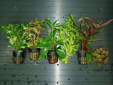 Plantas de acuario. LOTE 6 TIPOS A. ENVIO 24/48H.