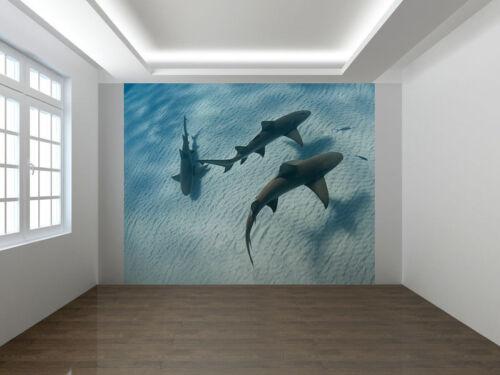 10708290 Requins Natation le long de la Mer Lit Bahamas PHOTO PAPIER PEINT MURAL