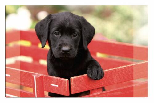 mit Hundemotiv 68x44cm Schreibtischunterlage Größe