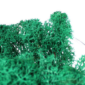 Dried-Reindeer-Moss-Turquoise-Green-Perfect-for-air-plants-amp-Crafts