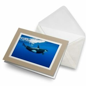 Greetings-Card-Biege-Orca-Killer-Whale-Underwater-2006