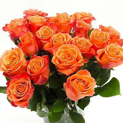 Orange Rosen im Bund, ca 50 bis 60cm +/- Bundware, Blumenversand, Blumen