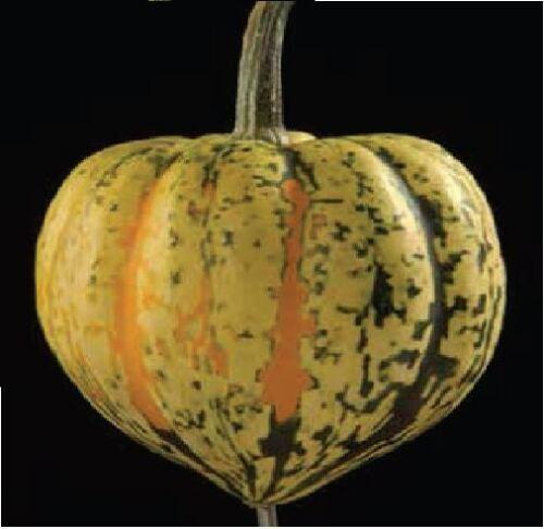 150 graines-en vrac Légumes-Courge-Celebration
