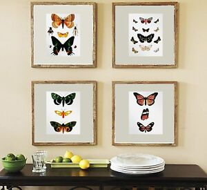 Wall Hanging Set Of 4 Vintage Butterfly Prints Bedroom