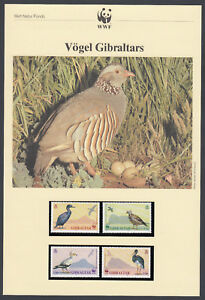 Gibilterra-BIRD-BIRDS-quattro-cartoline-quattro-FDC-copre-WWF-NATURA-Fondo-Mondiale-1991