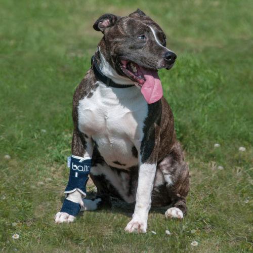 Balto Dog Carpal Instability Brace: Carpal Hyperextension. BTSPLINT Orthopaedic