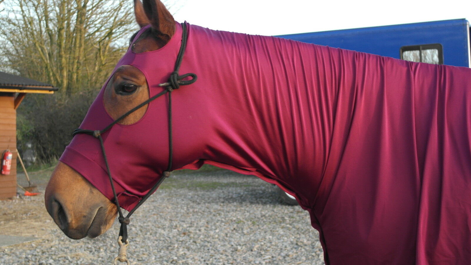 Lycra horse hood  BURGUNDY MAROON