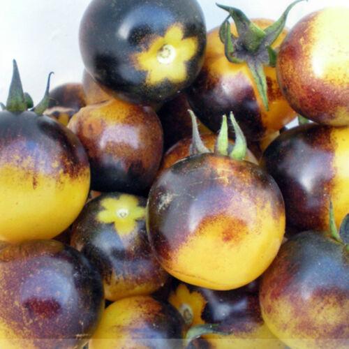 RARITÄT aromatisch und fruchtig 20 Tomatensamen 2020 Bumble Bee aus China