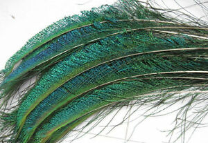NEW Real Natural Genuine Peacock Sword Feathers Arts Crafts Costume Project