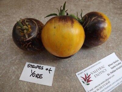 Goldene Kuppel Tomate Zolotye Kupola SAFTIGE FEINHEIT! Saatgut 5+ Samen