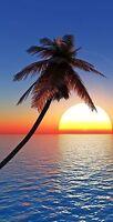 Palm Tree Sunset Over Water Cornhole Board Prints / Wraps / Corn Hole