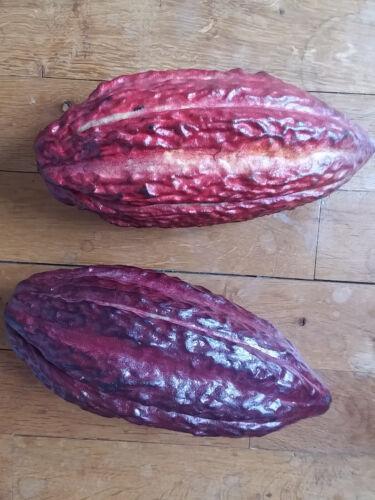 Theobroma Cacao Cocoa pod RARE Cocoa pod
