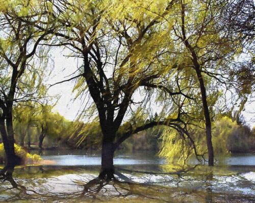 "* SME 8x10 Metallic Art Photograph /""WILLOW TREES IN THE LAKE/"" Wall Decor Design"