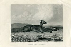Animales-Dog-Greyhound-And-Hare