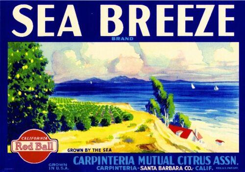 Carpinteria Santa Barbara Sea Breeze 2 Lemon Citrus Fruit Crate Label Art Print
