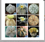 20-seeds-mixed-Astrophytum-succulents-home-garden-plants-Home-Bonsai-Decor thumbnail 1