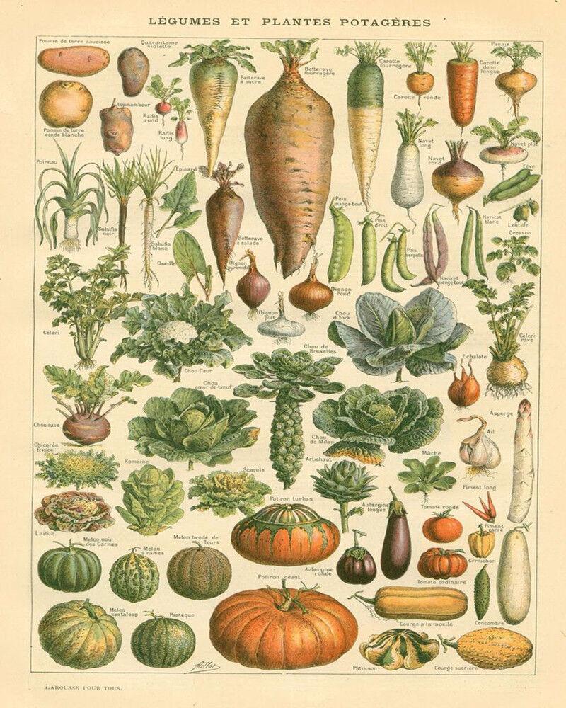 פוסטר ירקות וינטג'