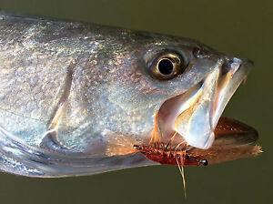 Bonefish, Permit, Trout, Redfish Leftover Shrimp Fly Fishing Flies 6 flies