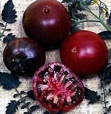 Black Russian Tomato Seed