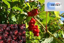 DR T&T Top quality Schizandra Berries Wu Wei Zi dried berry 100g dry herb