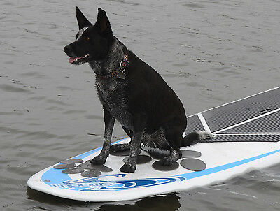 Pup Deck SUP Traction Pad for Dogs Stand Up Paddleboard Deck Padding Paw Prints