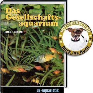 Ratgeber-Gesellschafts-Aquarium-Welche-Fische-passen-zusammen-passende-Becken