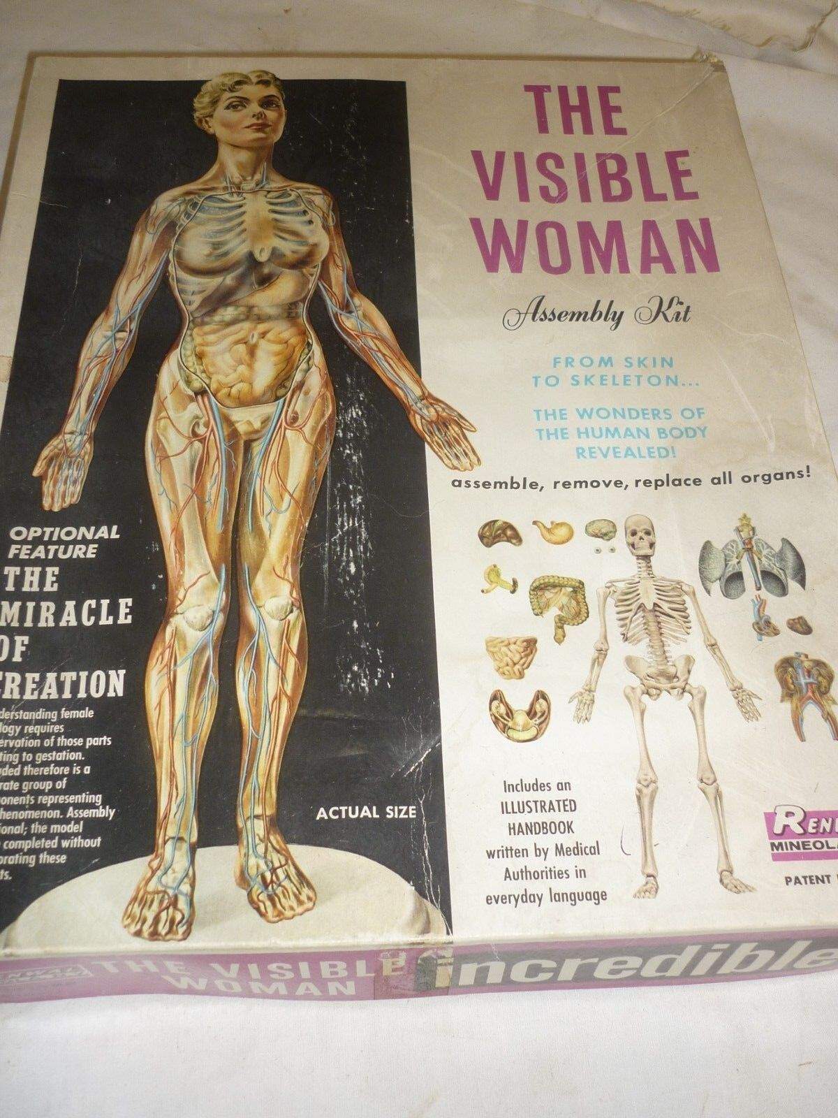 Very rare 1959 Renwal un made plastic kit of the visible Woman, boxed opened