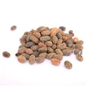 Jamalgota Seed-Croton Seed-Croton tiglium Seed-Jamalghota