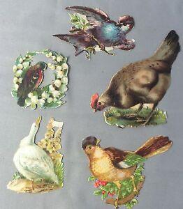 5 Antique Original BIRDS Goldfinch Chicken Duck Victorian Die Cut Scrap
