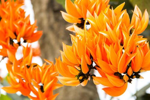 Le lackbaums a pittoresque fleurs les adaptent parfaitement dans une image.