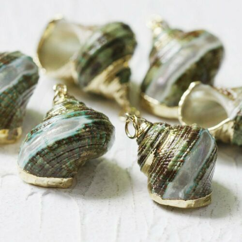 22x20mm 2 Pieces Gold Tone Framed Real Natural Sea Snail Charms CW-#26