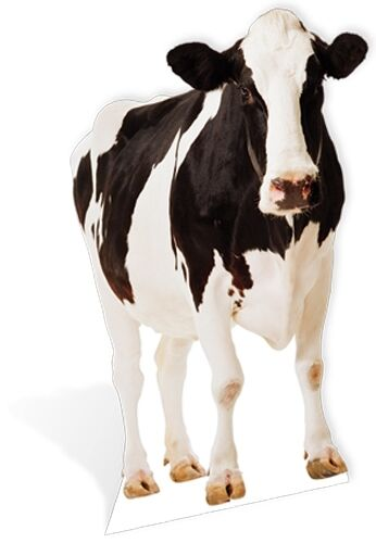 Cow Black & White Lifesize Cardboard Cutout Fun Figure 152cm Tall -At your Party