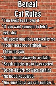 BENGAL-CAT-RULES-I-039-M-SPOILT-GET-OVER-IT-Laminated-Sign-Ideal-Gift