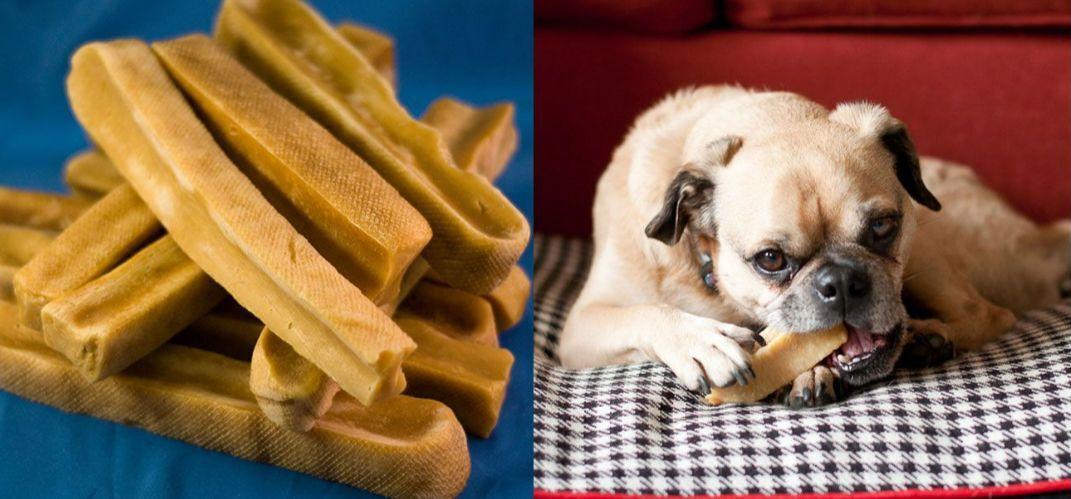 1500 GMS 3.30 Libbre (15 PZ da 24 PZ) Biologica dell'Himalaya cibo per cani Masticare YAK LATTE