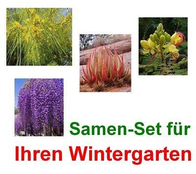 exotische Samen ZWERGALOE wunderschöne Gartenpflanze tolle Farben