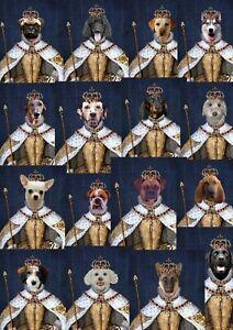 Dog-as-a-Queen-Bulldog-Labrador-Alsatian-Dalmatian-Dachshund-Pug-Husky-Poodle