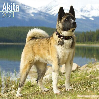 White Shepherd 2021 Dog Breed Calendar 15/% OFF MULTI ORDERS!