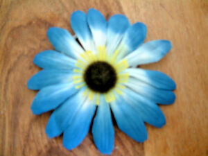 Blue White Flower Daisy Ponio Corsage Hair Band 11cm Yellow Brown