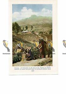 Talawakele-Picking-Tea-Ceylon-Sri-Lanka-Book-Illustration-c1920