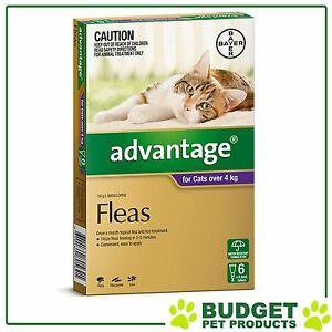 Advantage-For-Cats-Over-4kg-6-pack